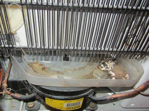 Kühlschrank: Die Rückseitige Auffangschale Für Kondenswasser Ist Totla Verkeimt.
